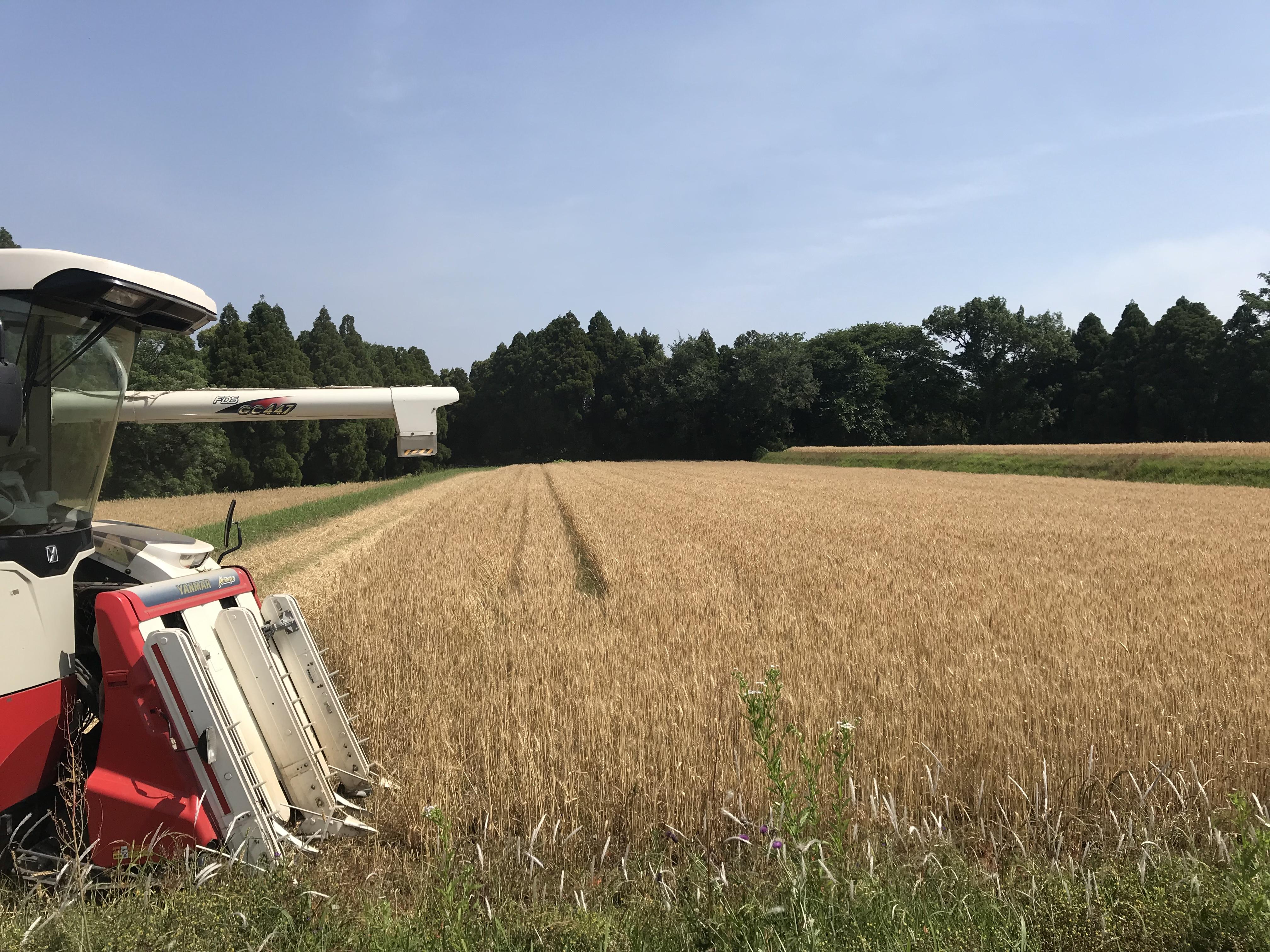 原農場|熊本県菊池市七城町の自然栽培無農薬のお米